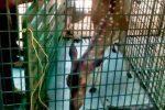 12 വര്ഷമായി വീട്ടില് പുള്ളിമാനെ വളര്ത്തിയ വീട്ടമ്മയെ വനം വകുപ്പ് പിടികൂടി