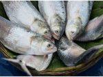 प्रिमच्योर बर्थ का खतरा कम हो सकता है फिश खाने से