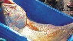 മഹേഷിനേയും ഭരതിനേയും കടലമ്മ കനിഞ്ഞത് സ്വര്ണ്ണ മത്സ്യം നല്കി; ലോട്ടറിയടിച്ച സന്തോഷത്തില് സഹോദരങ്ങള്