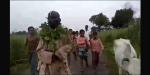 70-year-old Hindu man thrashed, face blackened and tonsured by 'Gau Rakshaks' for abandoning his ailing cow