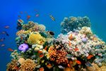 Oceans Heating Up Faster Than Previously Thought