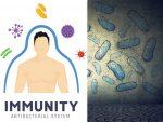 वायरस या बैक्टीरिया को शरीर में फैलने से इस तरह रोकती हैं कोशिकाएं