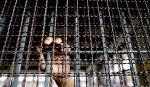 മഹാരാഷ്ട്രയിലെ ജയിലുകളില് തടവുകാരുടെ കൊറോണ പരിശോധന മരണപ്പെട്ടതിനു ശേഷം നടക്കുന്നുവെന്ന് ആരോപണം