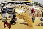 കർഷകരുടെ പ്രക്ഷോഭം തുടരുന്നതിനിടെ സിബിഐ പഞ്ചാബിലെ ധാന്യ സംഭരണ ശാലകളില് റെയ്ഡ് നടത്തി